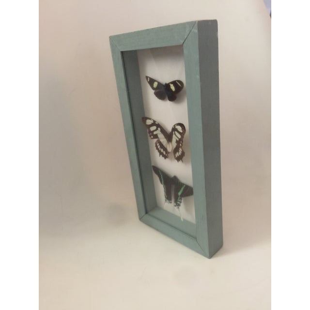 Butterfly Specimen in Shadowbox - Image 4 of 6