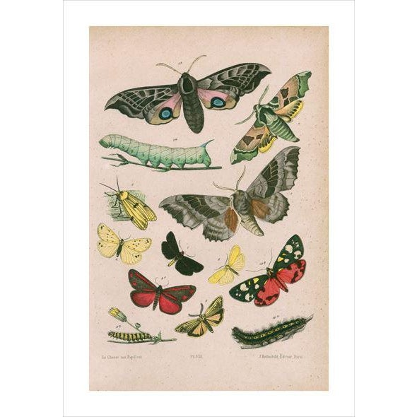 French Antique Moths & Caterpillars Archival Print For Sale - Image 3 of 4