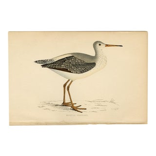 """""""Spotted Redshank"""", 19th Century Woodblock Engraving For Sale"""