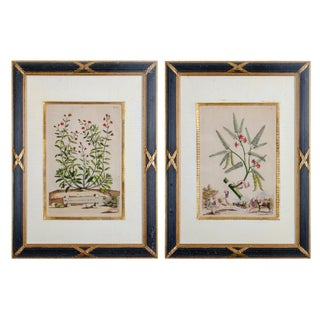 Neoclassical Munting Botanical Engravings - a Pair For Sale