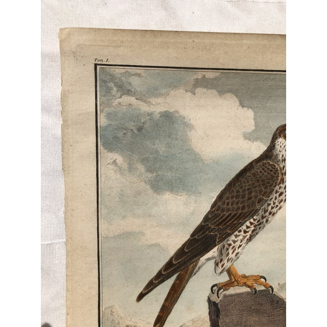 Paper 18th Century French Bird Engraving Signed by Jacques De Sève Featuring a Falcon For Sale - Image 7 of 13