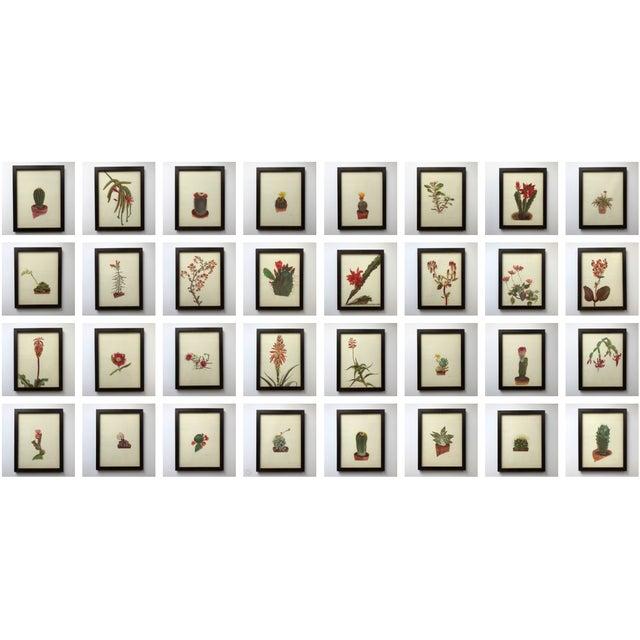 Framed Rock Plants - Set of 32 For Sale - Image 11 of 11