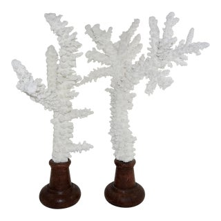 White Coral Branches Mounted on Round Wood Bases - a Pair