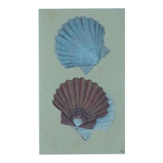 Original Scallop Shells Engraving C. 1803 For Sale
