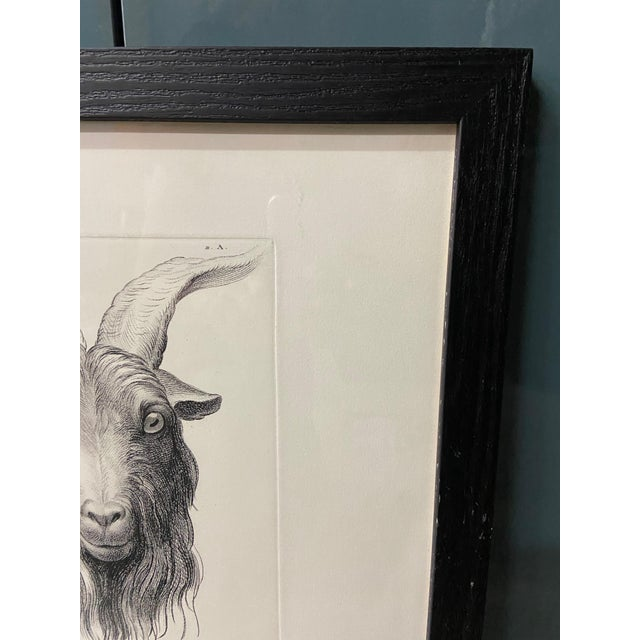 Man as Mountain Goat - Physiognomic Heads Series Framed Illustration by Charles Le Brun For Sale In Los Angeles - Image 6 of 11