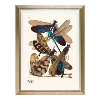"""Framed E. A. Seguy Print, """"Insects"""" Plate No. 10 For Sale"""