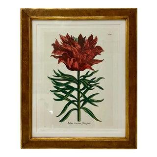 Trowbridge Botanical Print in Burl Maple Frame For Sale