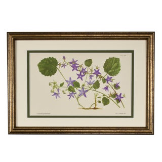 1959 Vintage English Botanical Flower Print, Framed For Sale