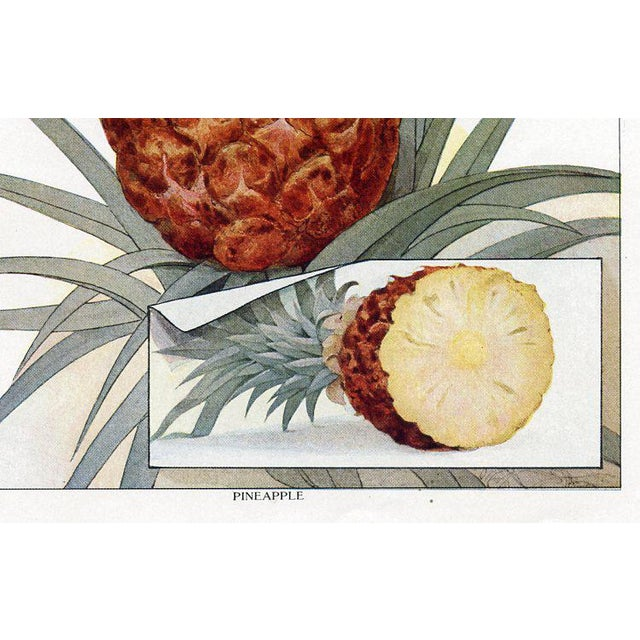 Original vintage Pineapple print from an early 1900s grocer's encyclopedia providing advice on the display and care of...