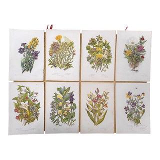 Antique Botanical Lithographs - Set of 8 For Sale