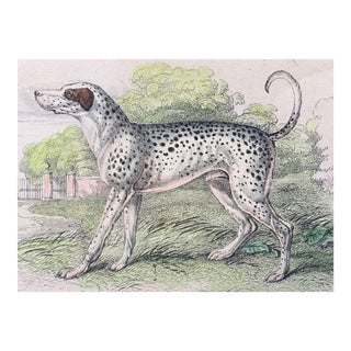 19th Century Jardine Dalmation / Coach Dog Engraving