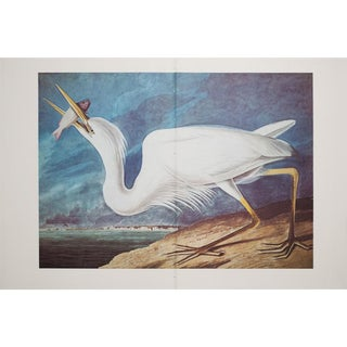 XL Vintage Lithograph of Great White Heron, 1966