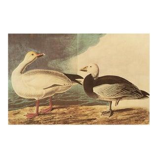 Snow Goose by John J. Audubon, XL Vintage Cottage Print For Sale