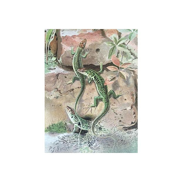 Traditional Antique Wall Lizards Lithograph, C. 1900 For Sale - Image 3 of 4