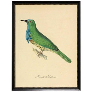 Green & Blue Merops Athertoni in Black Moulding With Silver Bead - 19ʺ × 25ʺ For Sale
