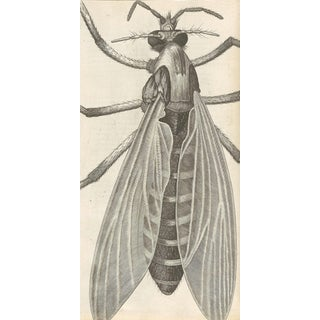 Traditional Illustrated Fly Print For Sale
