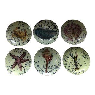 John Derian Seashell Design Coasters - Set of 6 For Sale