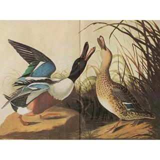 1966 Cottage Print of Shoveller Ducks by Audubon For Sale
