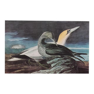 XL Gannet and Semipalmated Plovera Print, 1966
