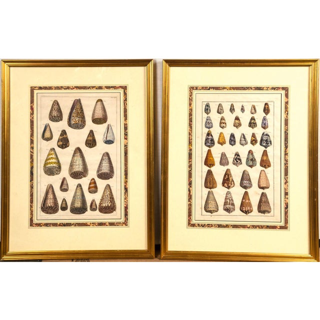 Pair of framed hand-colored lithographs of shell species, 19th century. Wonderful, colorful images. Some minor creases and...