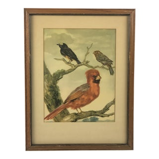 Vintage Framed Cardinal Painting For Sale
