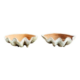 Aged Terra Cotta Conch Shells by Campo De Fiori - a Pair For Sale