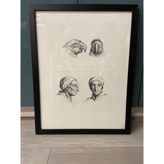Man as Parrot - Physiognomic Heads Series Framed Illustration by Charles Le Brun For Sale - Image 12 of 12