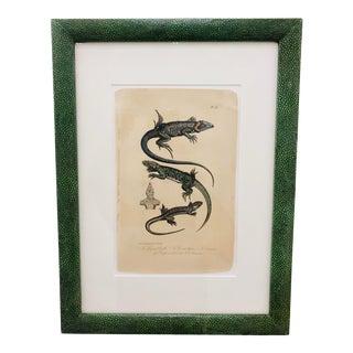 Antique Reptilian Lizard Print in Shagreen Skin Frame For Sale