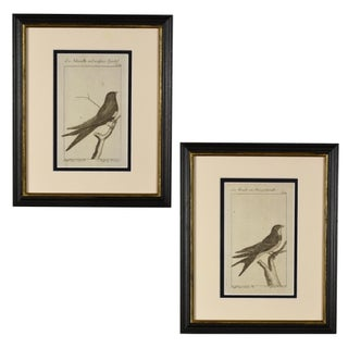 Late 18th Century Antique German Bird Prints - A Pair Preview