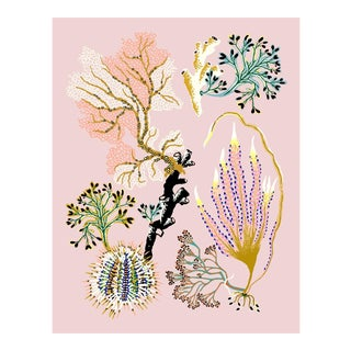 Sea Garden Urchin, Giclee Print by Sarah Gordon For Sale