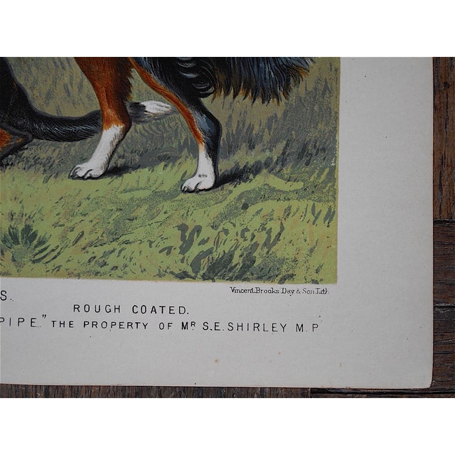 Antique Dog Lithograph - Sheep Dogs - Image 4 of 4