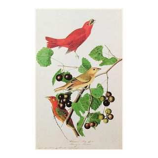 Red Summer Bird by John James Audubon, Vintage American Classical or Chinoiserie Print For Sale