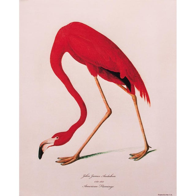 American Flamingo by John James Audubon, Large Reproduction Print For Sale
