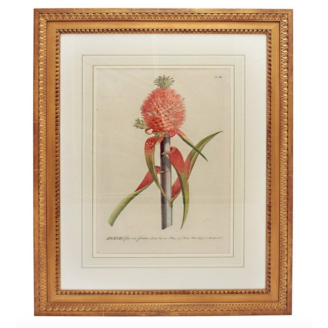 18th Century George Dionysius Ehret Botanical Print For Sale In Nashville - Image 6 of 6