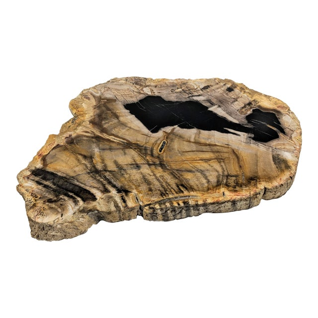 Polished Petrified Wood Tray For Sale