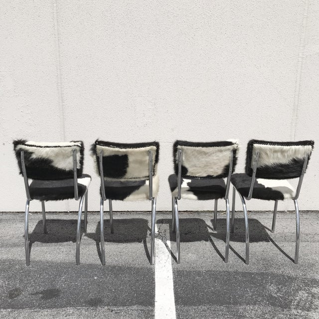 Set of four 1950's chrome legged Chairs with original upholstered black and white cowhide.