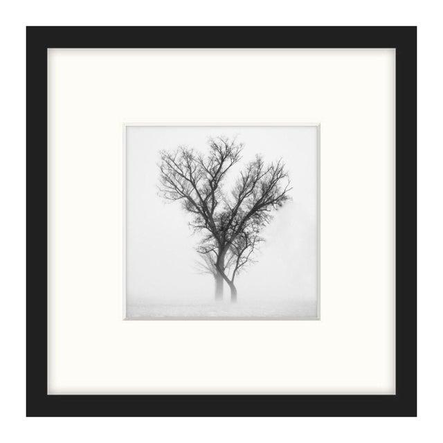 """Owen Whisenant """"Lone Tree"""" Framed Photo Print - Image 1 of 2"""