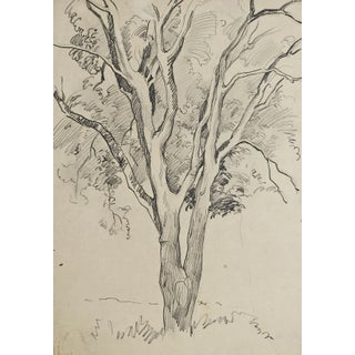 Tree Pencil Study by George Baer For Sale