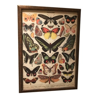 Framed Print of Antique Papillons French Book Plate For Sale