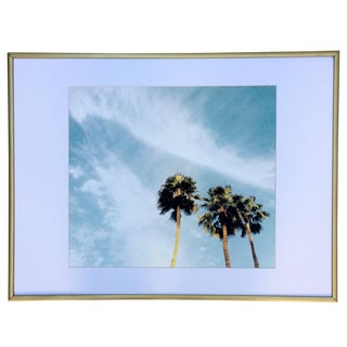Palm Springs Palms Photograph For Sale