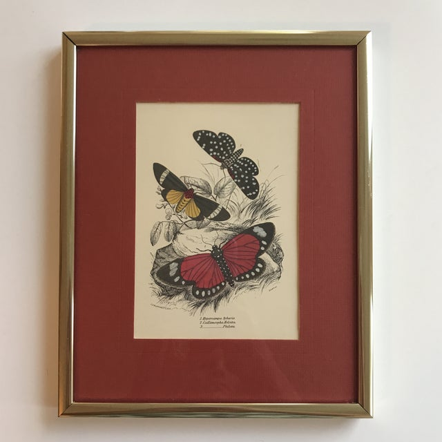 Vintage Butterfly Art Print For Sale - Image 5 of 7