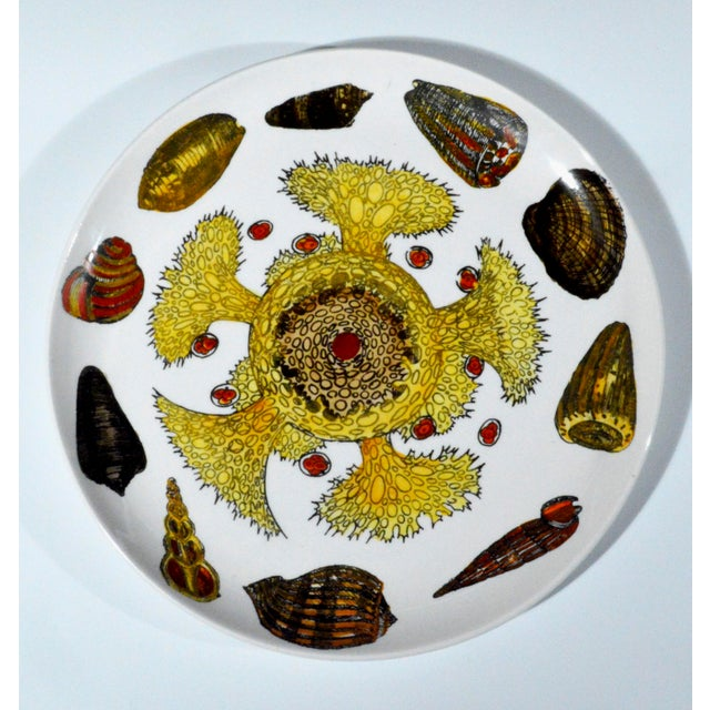 Vintage Piero Fornasetti Conchiglie Marine Life & Shell Plate, #4 - Image 2 of 2