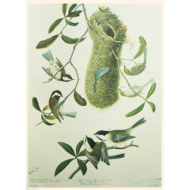Chestnut-Backed Titmouse by John James Audubon, Vintage Cottage Print For Sale In Dallas - Image 6 of 6