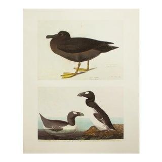 1966 Cottage Print of Great Auk & Dusky Albatros by John James Audubon For Sale