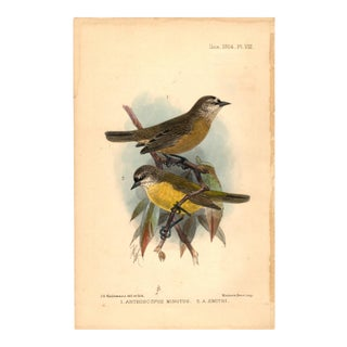 """1. Anthoscopus Minutus; 2. A. Smithi"" Limited Edition Bird Lithograph Original Hand-Colored and Pencil Signed by J. G. Keulemans Del. Et Lith. 1904 For Sale"