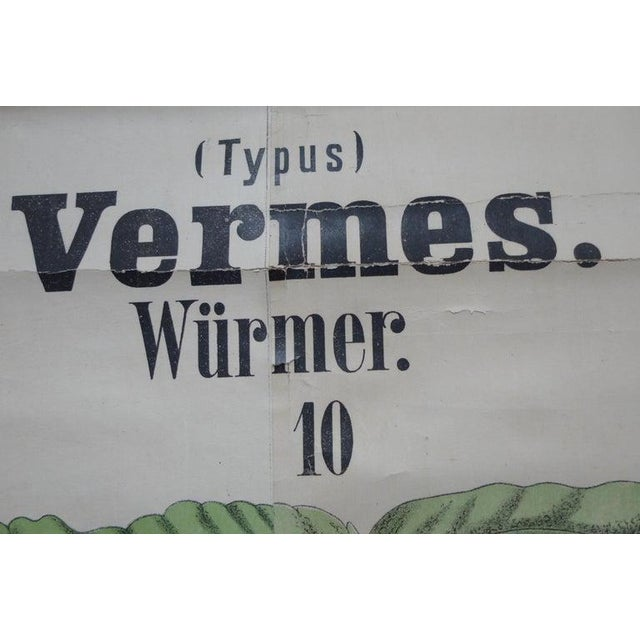 Midcentury Schoolhouse Print of Worms, Printed in Germany in German For Sale - Image 9 of 13