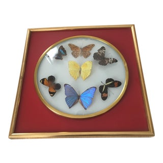 Vintage Butterfly Brazilian Specimen Art For Sale