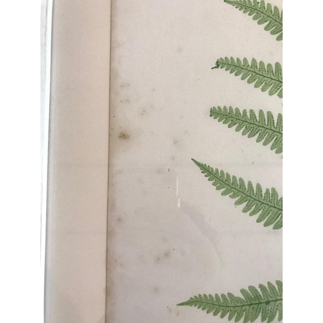 Mid 19th Century 19th Century Bradbury and Evans Nature Printed Fern Print For Sale - Image 5 of 6