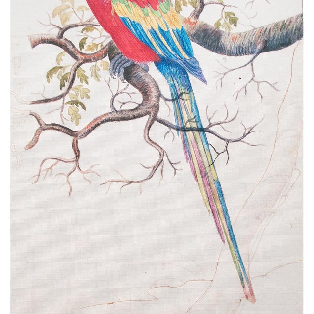 """American Classical 1590s Small """"Scarlet Macaw"""" Print by Anselmus De Boodt For Sale - Image 3 of 7"""
