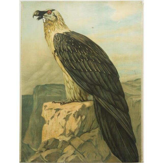 Paper German vintage eagle school poster For Sale - Image 7 of 7